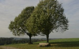 banner_trees-63885_800x332